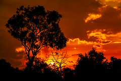 Sunset (betadecay2000) Tags: australia sunset abend evening tropen abendrot rot rood red roughe night sun sonnenuntergang sol wolken wetter weather territory northern australien aussie oz australie austral cloud clouds cloudy himmel heaven sky idylle