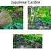 Buffalo New York  -Japanese Garden on Mirror Lake - Attraction Site