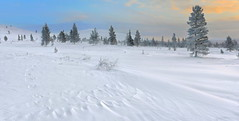 DSC_8781   Snow shapes (NordVei) Tags: snow shapes pallastunturi landscape lapland lappi northern finland natinational park wood winter clouds color outdoor trace hill cold wind blowing nikkor nikon panorama tree sky forest