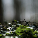 Spring on the forest floor thumbnail