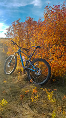 Bike in Bush (Bracus Triticum) Tags: bike bush アルバータ州 alberta canada カナダ calgary カルガリー 9月 九月 長月 くがつ kugatsu nagatsuki longmonth 2018 平成30年 fall autumn september