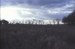 (no49_pierre) Tags: verylittlehouseonprairie 35mm nikon february storm clouds grass landscape film