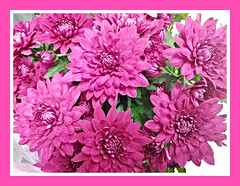 Spring Pink (bigbrowneyez) Tags: bright beautiful blossoms flowers fiori fleurs pink fuchsia petals nature natura lovely fresh bouquet uplifting belli bellissimi frame cornice gorgeous pretty spring primavera springpink delight light delightfful ottawa canad hotpink feastfortheeyes vibrant