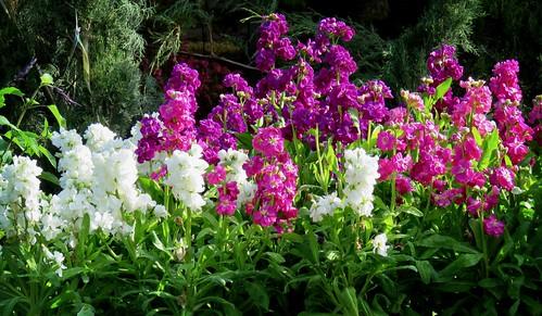 Flower Week - Day 2