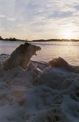 (Roaring.Images) Tags: shootfilm agfavista400 35mm film rollei35 agfavista