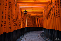 The Magnificent Torii Gates at Fushimi Inari Shrine (Kyoto, Japan 2015) (Alex Stoen) Tags: alexstoen alexstoenphotography autumn fall geotagged leicamptyp240 ngexpeditions natgeo nationalgeographicexpeditions summiluxm35mm travel vacation japan