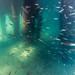 Underwater at Blairgowrie Pier-62