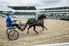 (Jen MacNeill) Tags: hackney pony ponies horse sulky cart show devon pa bay equestrian speed fast motion blur roadster