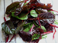 February 16th, 2019 Swiss chard from the garden (karenblakeman) Tags: cavershamgarden caversham uk swisschard vegetable 2019 2019pad reading berkshire