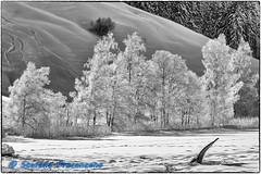 Lac Noir, givre (Stefano Procenzano) Tags: schwarzsee fr svizzera ch lacnoir lac lago lake nikon nikkor d750 nikond750 nikkor80200mmf28edaf 80200mm f28 80200mmf28 kenko14x kenkotelepluspro300dgx14x blackandwhite noiretblanc biancoenero nb bw monochrome blackwhitephotos silverefexpro2 bwartaward polarizer polarizzatore 80200mmf28af blackwhite dslr fx fmount