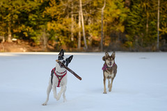 Bruce & Ruby (luke.me.up) Tags: nikon z6 nikonz6 50mm nikons50mm dog dogs dogphotography