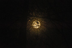 DILO - March 20 2019 Equinox (1) (tommaync) Tags: dilomar2019 equinox spring 2019 march nikon d7500 northcarolina nc dilo lunar moon fullmoon night trees chathamcounty chatham