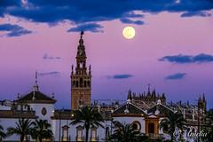 Luna de marzo (ameliapardo) Tags: luna lunallena atardecer cielo nubes giralda monumentos sevilla fujixt2 fujinon50140