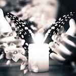 Le papillon et la flamme thumbnail