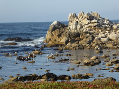 Lovers Point Tide pool (Aldene.Gordon) Tags: montereybayarea pacificgrove loverspoint california