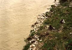 Mahananda river (Paolo Levi) Tags: mahananda siliguri westbengal india canon ftb fd 50mm ilfochrome