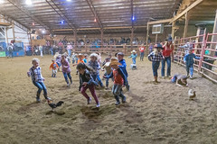Catch the chicken (sniggie) Tags: manton marioncounty xbarena rodeo