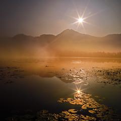 Mist on the lake (Robyn Hooz) Tags: fimon lago lake fog mist nebbia sole sun sunrise veneto vicenza lily water acqua specchio mirror