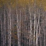 The Painterly Colors of Autumn thumbnail