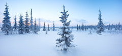 Winter forest panorama (czdistagon.com) Tags: winter snow landscape frozen fir beautiful frost new year dawn white season forest hoarfrost sun cold nature outdoor hoar spruce wood background snowy snowfall holiday vacation hill wonderland travel ice cloud panorama scene cover nobody panoramic view powder shadow scenic trip weather silence natural breathtaking tourism russia