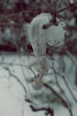 hanging (dolls of milena) Tags: bjd resin doll popovy sisters bony sleeping hanging outdoor portrait