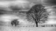 Winter (Jay-Aitch) Tags: monochrome winter wintry lumix g vario 14140f3556 panasonic dcgx9