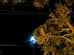 Moon Behind the Trees (Lux Llama Productions) Tags: christmas lights holiday holidays winter december jan january dec decor decorations decoration prop jesus usa us unitedstates florida bocaraton house suburb hot light led cool awesome santa sleigh reindeer deer trees tree orb