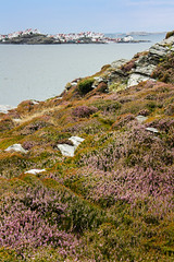 IMG_2339-1 (Andre56154) Tags: schweden sweden sverige küste coast wasser water himmel sky meer ozean ocean heide