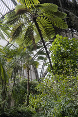 Tropical Green (charlottes flowers) Tags: botanicalbuilding balboapark sandiego palms green
