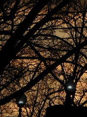 DSCN8114 (tombrewster6154) Tags: maple tree branches evening sunset late winter greensboro nc pretty lamps illuminated powerlines golden sky nightfall february 2019