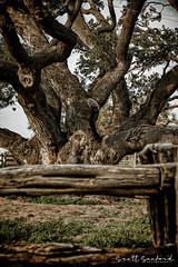 6D_Aransas (4)-Edit (Scott Sanford Photography) Tags: 6d canon ef24105f4l eos gooseislandstatepark naturalbeauty naturallight nature outdoor springbreak texas spring