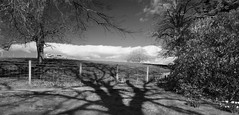 Cast a long shadow .... (Elisafox22) Tags: elisafox22 sony rx100 htmt treemendoustuesday htt texturaltuesday monotone shadows bw monochrome blackandwhite light dof patterns textures fyvie aberdeenshire scotland outdoors elisaliddell©2019