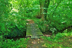 The bridge into the woods. (pstone646) Tags: woodland trees stream nature green flora bridge landscape sunlight shade