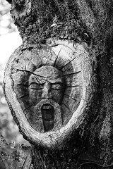 A Face in the Trees - St. Simons Island, Georgia (BeerAndLoathing) Tags: 2018 usa georgia floridatrip monochrome 77d bw greenman tree february canon stsimonsisland trips winter blackandwhite canoneos77d