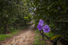 el camino... (J. Kaphan) Tags: jardín antioquia colombia southamerica latinamerica flower flowers dirtroads landscape landscapephotography travel travelphotography traveler travelblogger traveling walk hike journey explore color fujixseries fujifilm fujixt2 35mm