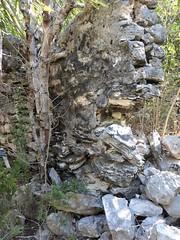 Half Moon Cay, Bahamas, Day 4 -- Caribbean Cruise Vacation, Nature Walk, Ruins of  Limestone Houses of Earlier Inhabitants (Mary Warren 12.9+ Million Views) Tags: bahamas halfmooncay nature flora plants green hollandamerica cruise vacation house ruin limestone rocks stones