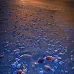 Sunrise with seashells on Bowman Beach, Sanibel Island, Florida thumbnail