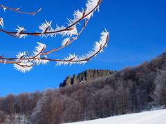 fagyos érintés / frosty touch (debreczeniemoke) Tags: tél winter hó snow túra hiking erdő forest fa tree hegy mountain gutin gutinhegység gutinmountains sziklabérc piton kakastaréj creastacocoşului olympusem5