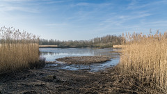 Lake (DC P) Tags: end day rotterdam polder barnedrecht netherlands sun sunset sunrise sunny sunlight sunshine againstthesun landscape landschaft water waterfront watercourse waterscape sony a7rii reflection serene tree travel nature view autumn beautiful color dof explore fantastic gold holland light ngc nederland outdoor outside pov panorama reflections sky z grass river wood boat lake zeiss 2470