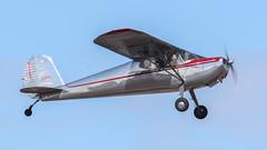 Cessna 140 N76657 (ChrisK48) Tags: kdvt aircraft 1946 airplane nc76657 cessna140 phoenixaz dvt phoenixdeervalleyairport n76657