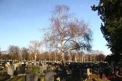 IMG_8498 (Pfluegl) Tags: wien vienna zentralfriedhof graveyard europe eu europa österreich austria chpfluegl chpflügl christian pflügl pfluegl spring frühling simmering
