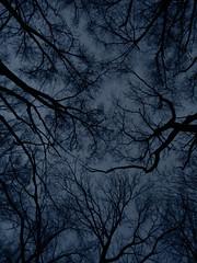 Dark (Stillhet A.) Tags: darkness trees wicked evil silence