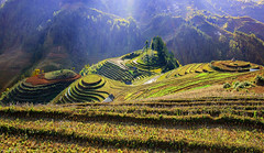 Mu Cang Chai- impressed by the marvelous surroundings of the terraced fields (@Jarmila) Tags: terraced fields mu cang chai nature vietnam risaie mam xoi viewpoint mountains rice terraces mucangchai forest wood asia indocina vietnamese agriculture outdoors hmong ethnic street travel landscape view mù chải village lao cai