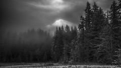 the Future isn't Promised (writing with light 2422 (Not Pro)) Tags: thefutureisntpromised 2018 mountain peak fog forest glen longmire mountrainiernationalpark mountrainier volcano fleeting mrnp washingtonstate hugs love mood richborder sonya7 blackandwhite monochrome bw landscape variotessartfe42470 pacificnorthwest