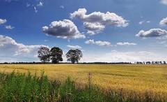krajobraz (roman25a) Tags: krajobraz