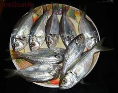 Somdalle (Joegoauk_7) Tags: joegoauk goa fish butterfish somdalle somdaye