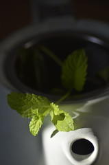 Brew (MM) (Flip the Script) Tags: macromondays macro brew mint tea herbal health wellbeing drink winter plant plants leaf leaves bokeh