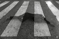"Proyecto ""ciudad MALDITA"" (15/15) (nieves.valderrama) Tags: blackandwhite blackandwhiteperfection blackandwhitephotography blacknwhite bnw bw bwphotography city composition conceptualart contrast doubleexposure finalproject madrid malditaciudad monochrome multipleexposure nofilter personalproject photoshoot picoftheday storytelling town visualstory"