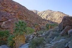 Palm Canyon walk (neil.dalphin) Tags: green borrego anza springs canyon palm walk desert park california usa america
