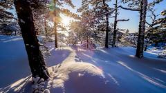Tulikallio, East-Helsinki, Finland. (Esa Suomaa) Tags: helsinki winter snow trees saveourtrees scandinavia finland suomi olympusomd